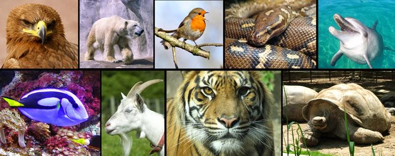Resultado de imagen de animales diferentes